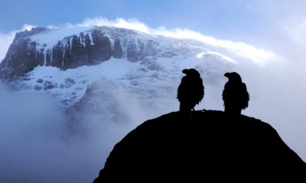 Tanzanie – Ascension du Kilimandjaro [ récit – 2]