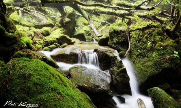 Balade dans la forêt primaire de Yakushima – Japon