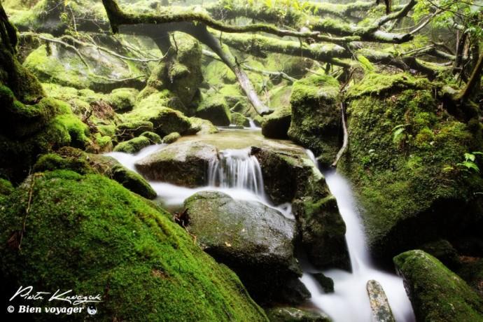 Balade dans la forêt primaire de Yakushima - Japon