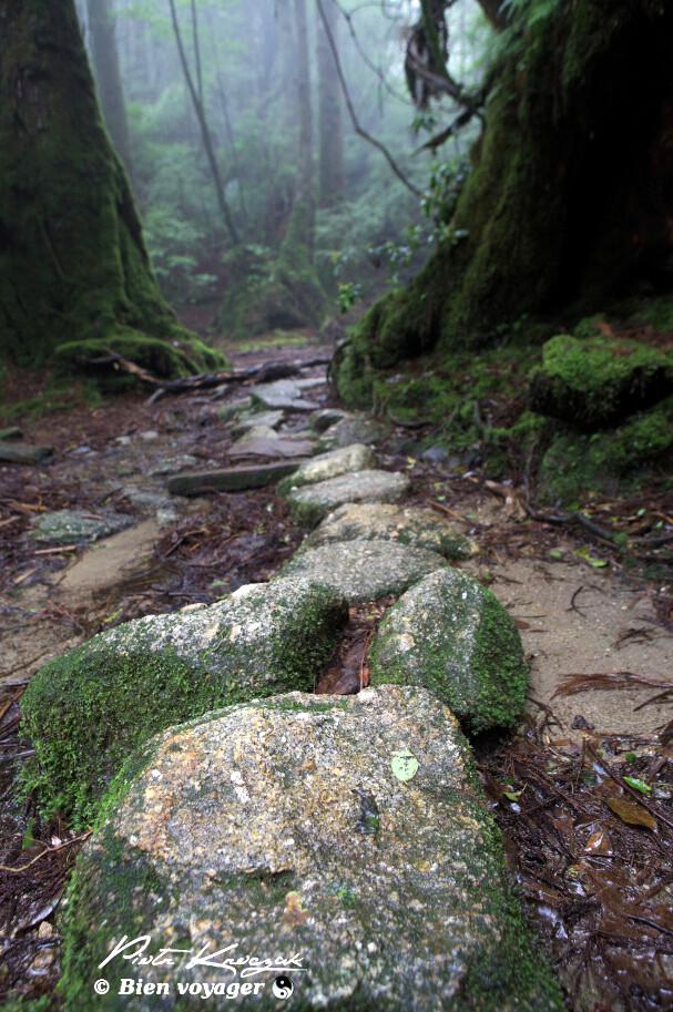 Yakushima mononoke (6)