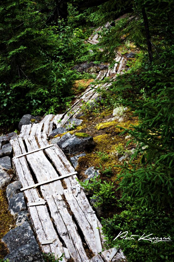 sentier fjord (15)