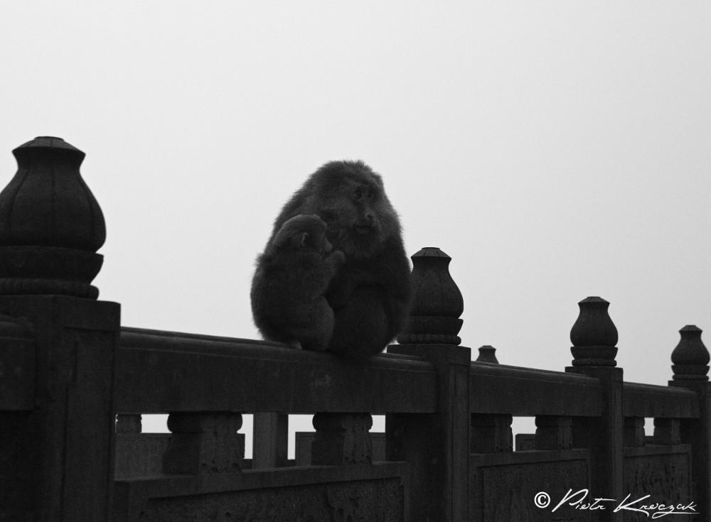 temple mont emei shan (11)