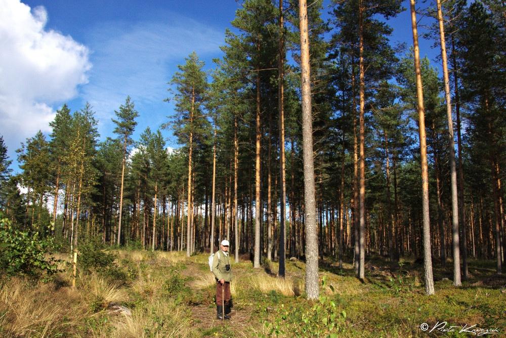 Randonnée finlandaise à Sammalistonpolku