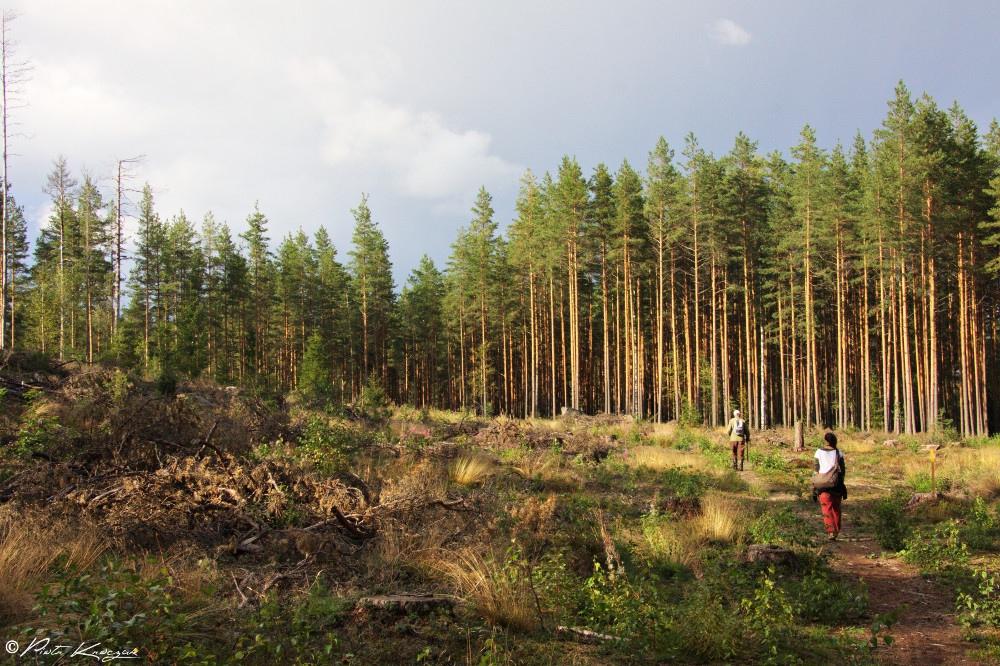 randonnée finlande (2)