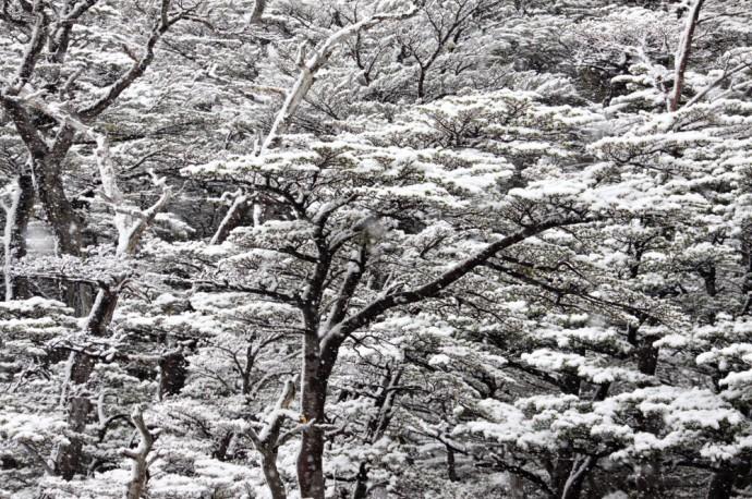 meteo neige trek W Chili Patagonie (3)