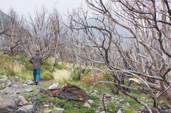 Chili Patagonie (5)