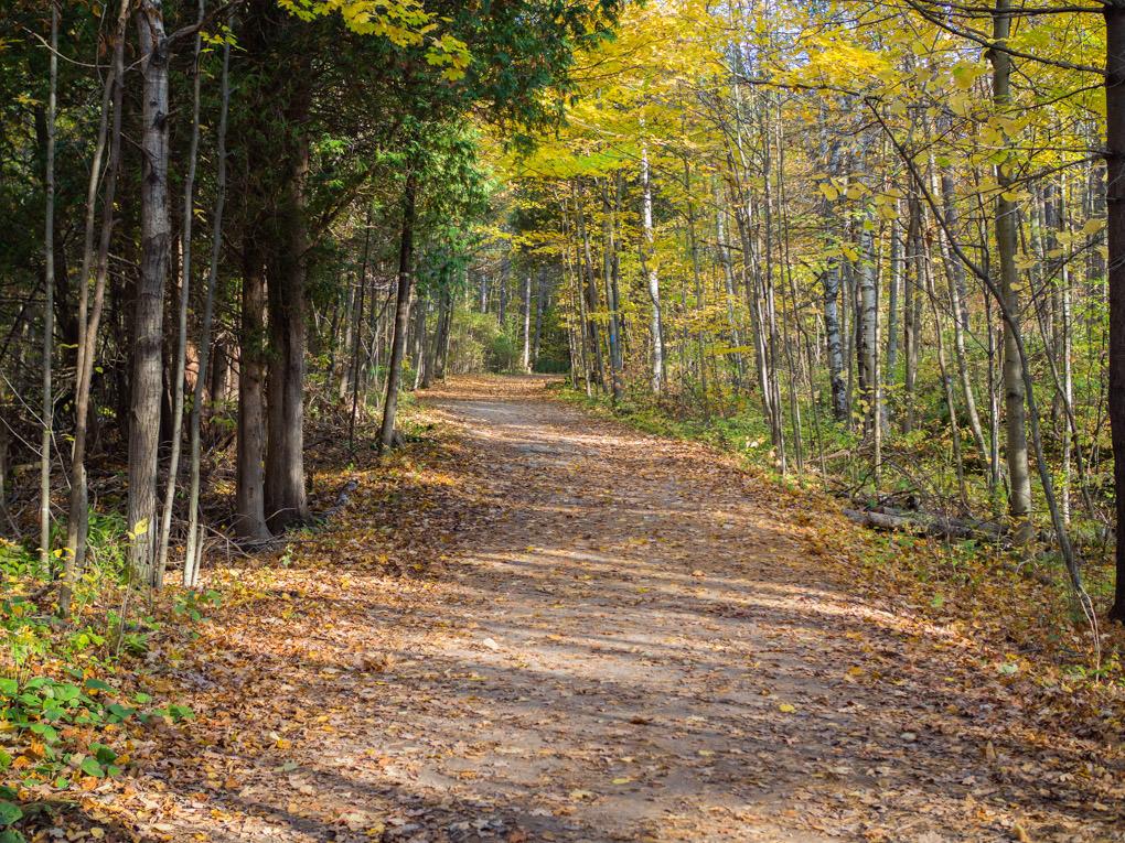 hilton-falls-rando-automne-canada